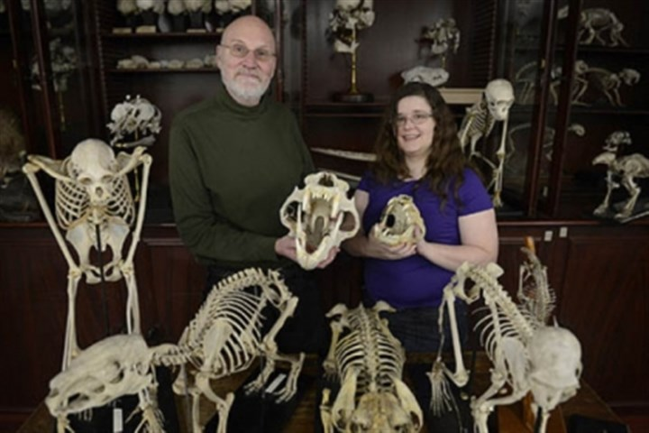 tree of life fossils John Wible and Michelle Spaulding participated in creating the Tree of Life, which includes DNA and anatomical descriptions of placental mammals that is one of a kind.