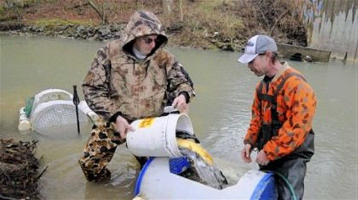 Hatchery trout are in the water but don 39 t take them for for Pa fish stocking