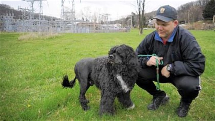 Watson Craig Rader of Ambridge shows off his Portuguese water dog, Watson, the father to President Obama's new puppy Bo.