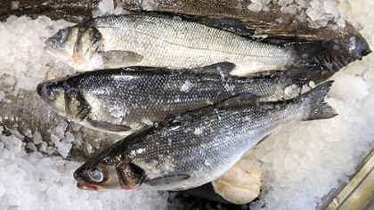 Bronzini, a k a Mediterranean sea bass Bronzini, or Mediterranean sea bass, at Penn Avenue Fish Co.