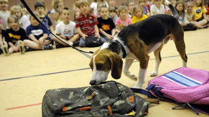 Dino, the bedbug detectinig beagle Dino, the bedbug detecting beagle, demonstrates his skills to first graders at Bentworth Elementary School in Bentleyville.