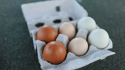 Eggs and eggs Eggs from Nancy Chubb's flock. From left: Black Copper Maran eggs, Faverolles eggs and Easter Egger eggs