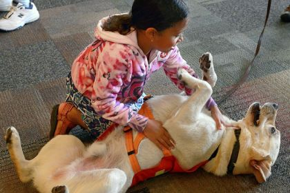 Hank and Uma Simhan Hank, a cadaver working dog with CAESAR enjoys a belly rub from Uma Simhan, 8, of Point Breeze at the Heinz History Center's event featuring working, service and therapy dogs.