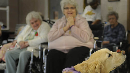 Heidi Elizabeth Price and Lana J. Lloyd, residents of Riverside Care Center in McKeesport, watch as Heidi, a 6-year-old Golden Retriever, waits for the command to eat the treat balanced on her nose during a visit by the Keystone Canine Club from Bethel Park.