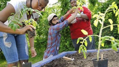 Jayda Harden, Mark Williams and Brandon Kenney Jayda Harden, 14, left, with Mark Williams, center, and Brandon Kenney, 14, plant tomatoes in a raised bed for the Lots of Hope gardening project at The Pittsburgh Project on the North Side.