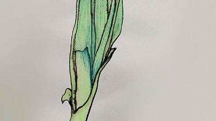 """Leek,"" by Patricia Lowry ""Leek,"" watercolor by Patricia Lowry."