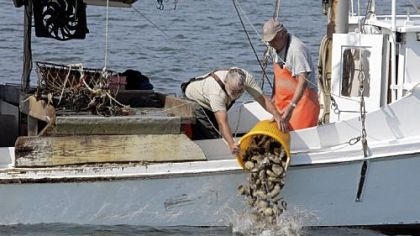 Oysterman Oysterman Gerald Condrey, left, dumps a bushel of large oysters overboard on an oyster reef in the Rappahannock River off of Deltaville, Va., in 2007. The harvested oysters were sold back to the Virginia Marine Resources Commission for breeding stock on a protected oyster reef.
