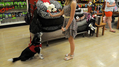 Pet Tales Moochie & Co. store manager Nancy Goebel gives command to her 9-year-old border collie mix, Romeo, at the Mall of Robinson.