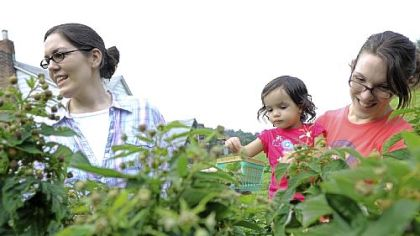 Picking raspberries Rachel Kottler, left, of Squirrel Hill and Peggy Jaafar of Oakmont with her daughter Aicha, 20 months, pick raspberries at Churchview Farm.