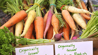 Produce at Market Square farmers market Heirloom carrots and radishes from Prospect Meadow Farm in Butler County at the Market Square farmers market, Downtown.