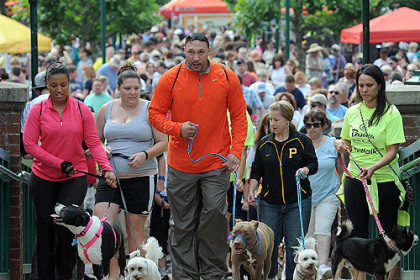 Pup Walk Charlie Batch, center, and his wife, Latasha, left, lead off the fourth annual Pup Walk at The Waterfront in Homestead last Sunday morning. The event, a benefit for the Western Pennsylvania Humane Society sponsored by Panera Bread, drew 1,000 people and 500 dogs.