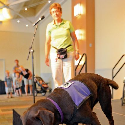 Queen Mab Queen Mab, a 14-month-old chocolate Labrador in service training, fetches a TV remote with a handle attached during a demonstration by Susan Tyson of Susquehanna Service Dogs.