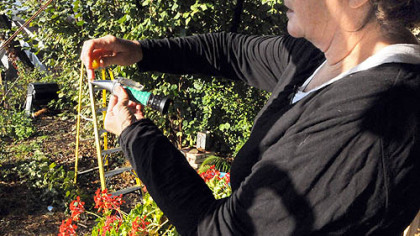 Suzy Meyer squeezes the juice from a tomato onto a refractometer Suzy Meyer squeezes the juice from a tomato onto a refractometer, which measures the brix level of the fruit.