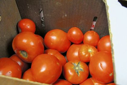 "Tomato 'seconds' Tomato ""seconds"" for sale at the Lawrenceville Farmers Market."