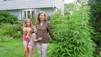 Weed scientist Chatham University weed scientist Nancy Gift and daughters Emily, left, and Hazel with Joe Pye weed, a volunteer that thrives in the front yard of their O'Hara home.