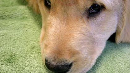 Xante Everyone loves a puppy.