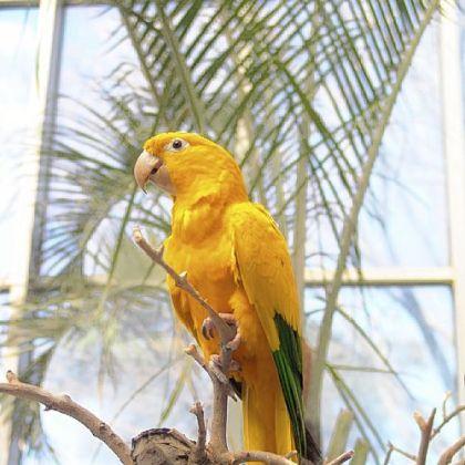 Largest Amazon Parrot Amazon Parrot Amazon Parrot
