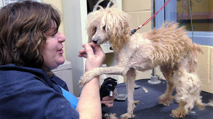 Greene County Ohio Dogs For Adoption