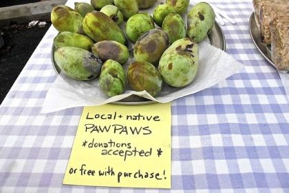 Pawpaws Pawpaws on display at Farmers@Firehouse market.