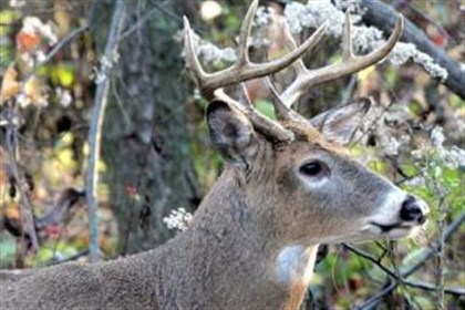 deer population Recovery can be difficult in heavy brush. Taking an ethical shot is more important than ever.