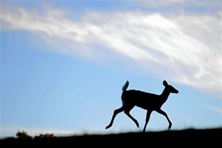 Deer cause damage Deer cause an estimated $400 million in damage from collisions with cars across Pennsylvania.
