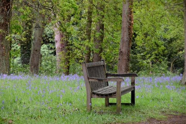 20131025DOlondonbenchMAG-2  A bench in a field of blue wildflowers at Wisley Gardens in London.