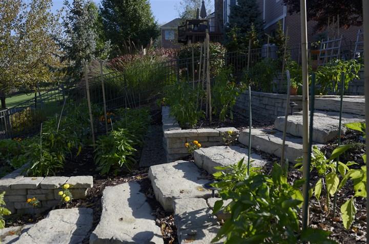 Backyard Terraced Vegetable Garden : Veggie garden Irene Fostyks vegetable garden has steps and terraces