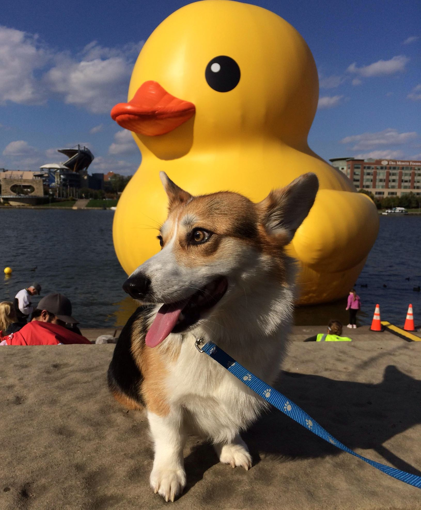 Yoshi Yoshi, a Corgi belonging to Scott Auth of Scott, foreground, visits the duck at the Point.