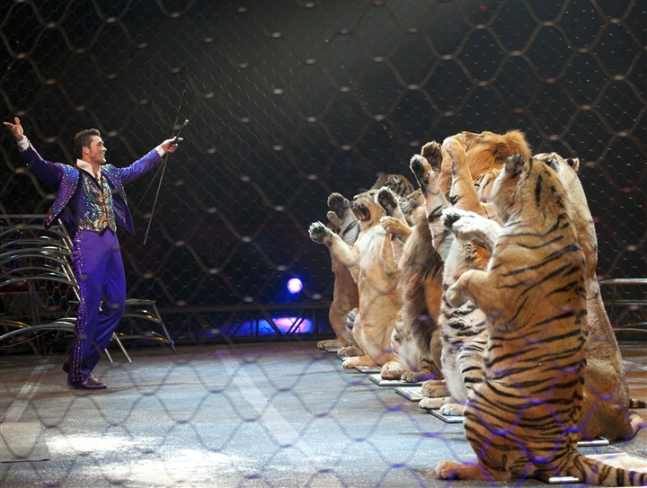 Ringling Tiger trainer Alexander Lacey and his assembly of big cats will be at the Consol Energy Center.