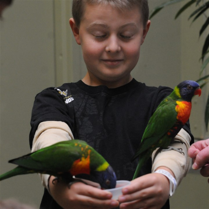 2013dsCanaryCallMag05-1  Forrest Price, 10, of Bellevue, feeds lorikeets at the new Canary's Call exhibit at the National Aviary on the North Side.