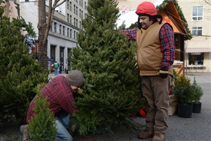 20131123rldMartLOCAL03-2 Michael Knoop, left, of Highland Park and Art DeMeo of Glenshaw set up Christmas trees at their Holiday Market booth in Market Square.