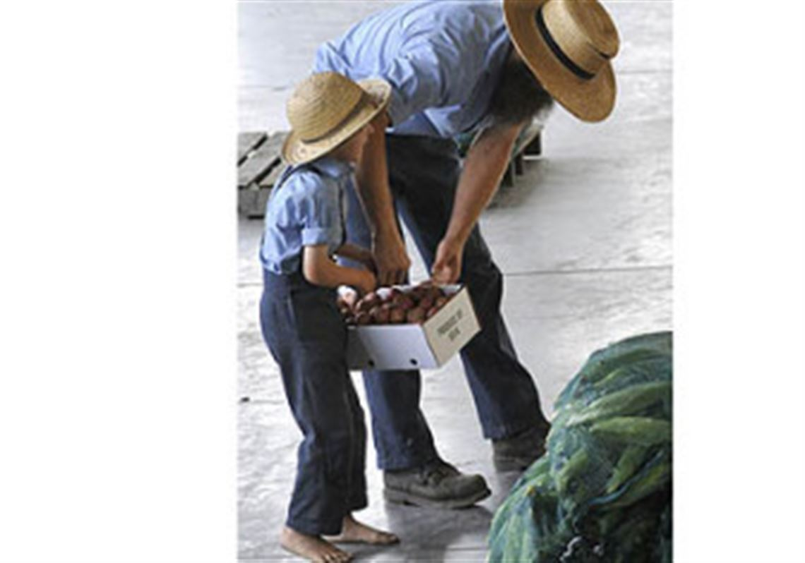 Wholesale produce auctions help smaller farms reach larger