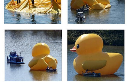 Breathing life into ducky A crew at the Alcosan treatment facility on the Ohio River readies the inflatable 40-foot duck for its U.S. debut Friday afternoon. The brainfowl of Dutch artist Florentijn Hofman will be floating on the city's rivers until Oct. 26.