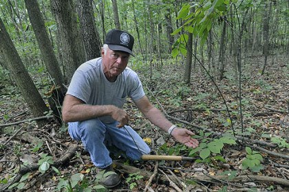 Ginseng2 Ray Butz shows a ginseng berry in Westmoreland County while digging up the root.
