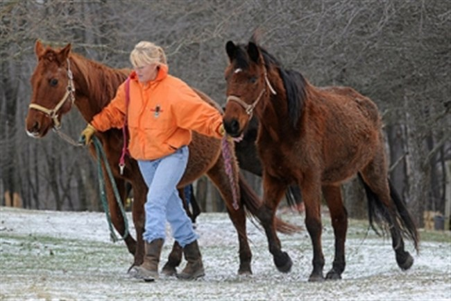 Pam Vivirito, of Equine Angels Rescue in West Deer, pleaded guilty Thursday in federal court to mail fraud and a tax offense connected with the nonprofit.