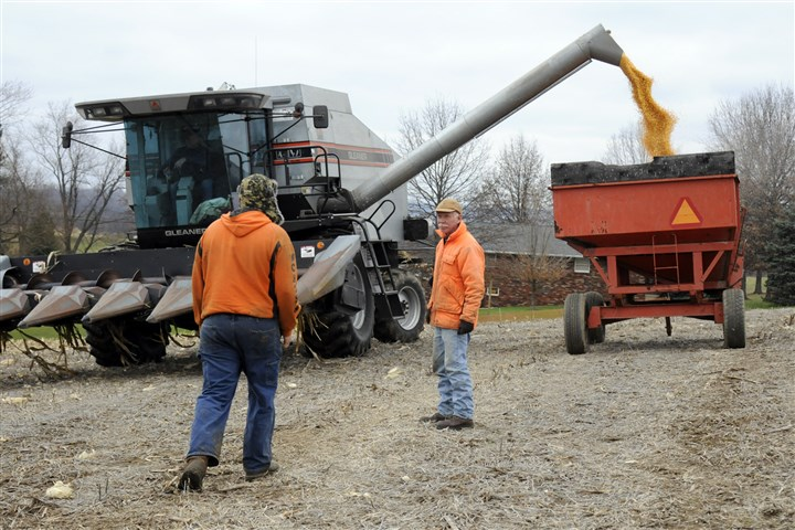 20131126RARfarmer5-4 Dairy farmer Ralph Frye, center, waits for his farm hand Ryan Long as the combine loads his corn into a trailer to be taken to semi-truck waiting along the road and taken to storage.