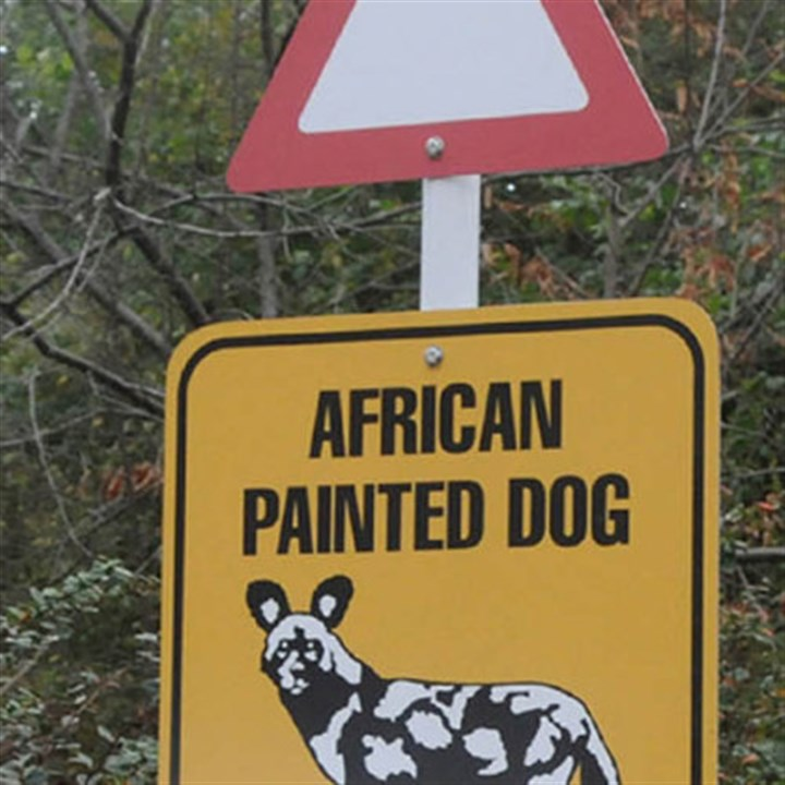 "african dogs sign at pittsburgh zoo Some of the signs on display at the ""Painted Dog Encounter"" at the Pittsburgh Zoo and PPG Aquarium."