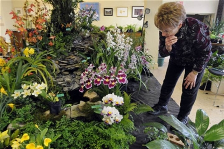 Barbara Tisherman Barbara Tisherman of Squirrel Hill works on her exhibit at the Orchid Show .