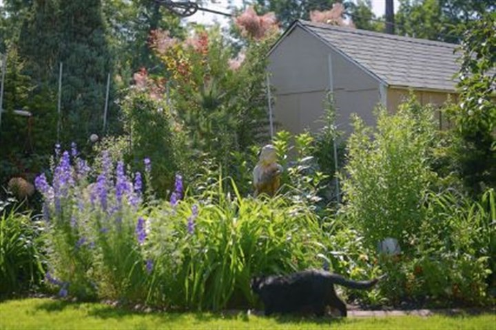 Garden Marian Edwards has a variety of annuals, evergreens and other low-maintenance plants in her backyard.