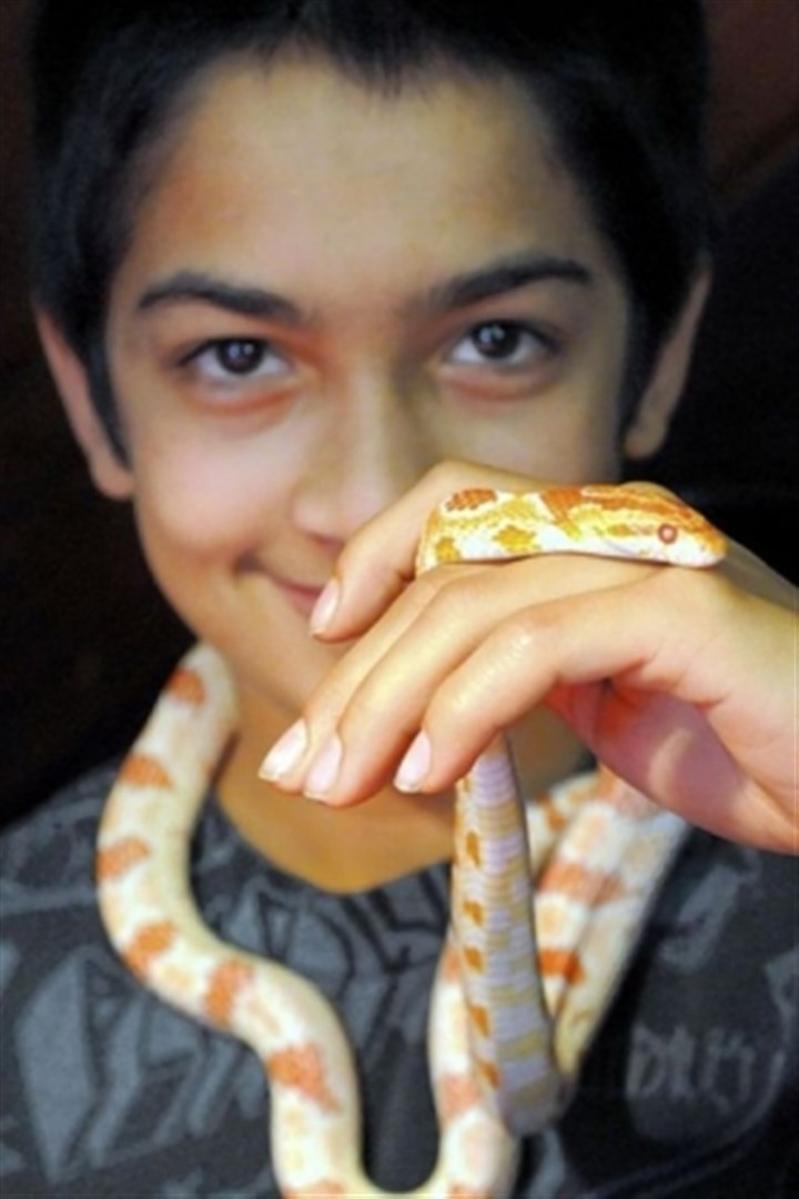 Pets 3 Chris Nagle, 13, with a corn snake at the Pittsburgh Reptile Show & Sale at Harmar House in Cheswick.