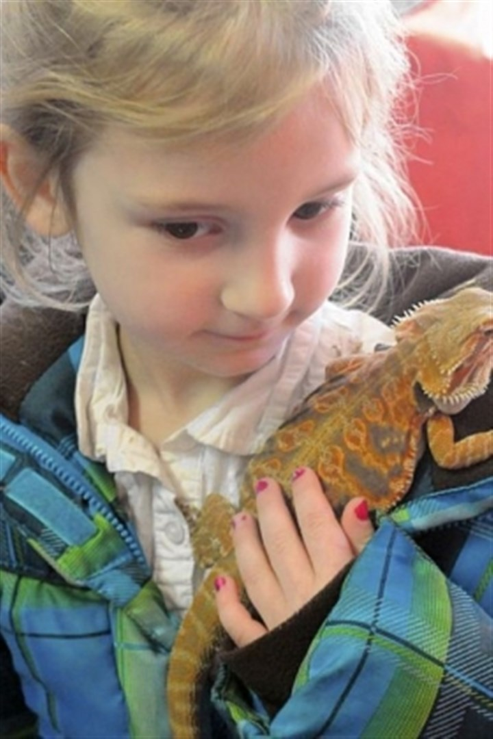 Pets 4 Lilly King, 5, carries her father Dylan?s bearded dragon.