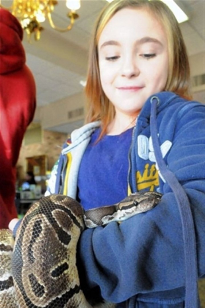 Pets 5 Kaylee Fair, 10, of Cheswick, examines a python at the show, where she had a booth selling snakes she had raised at home. She was considering buying the python.