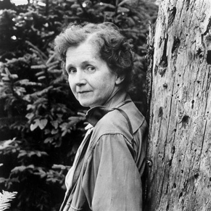 Rachel Carson tree Rachel Carson, a courageous scientist from Springdale, risked her health and reputation to fight for the environment.