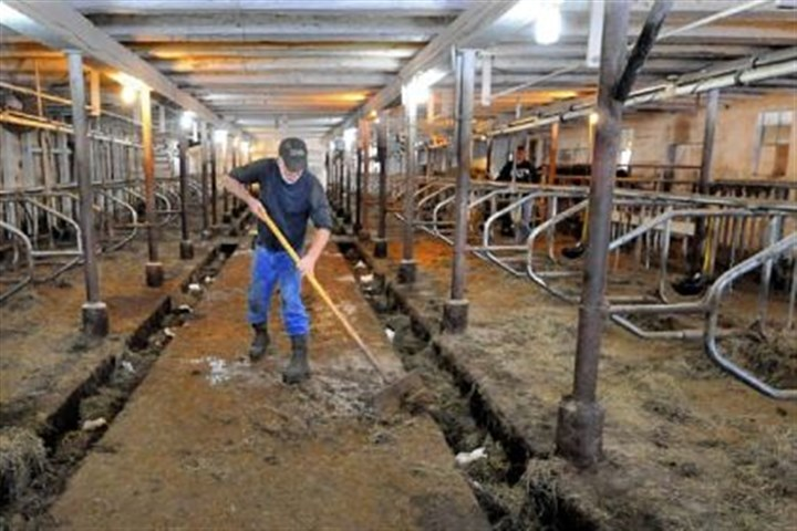 Ralph Frye Latrobe farmer Ralph Frye cleans his barn after he finishes milking 30 of his cows. Mr. Frye starts his day at 6 a.m. and spends the first 2 1/2 hours milking the cows.