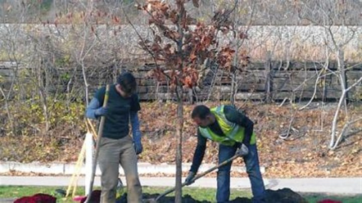 Tree Members of the Western Pennsylvania Conservancy's Greenspace Program plant the ceremonial 15,000th tree provided for the region through TreeVitalize Pittsburgh. The tulip poplar was planted in Millvale.