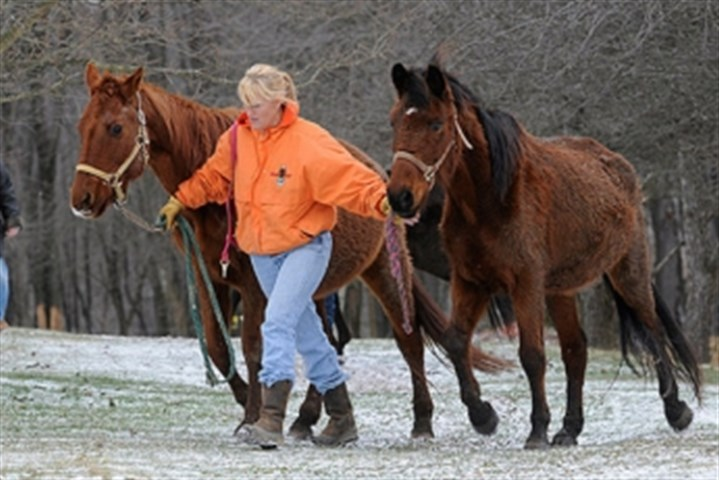 008.jpg Pam Vivirito, center, of Equine Angels Rescue in West Deer, walks two mares from a home in Butler County. Ms. Vivirito is planning to plead guilty in two schemes -- one for extortion and another for mail fraud.