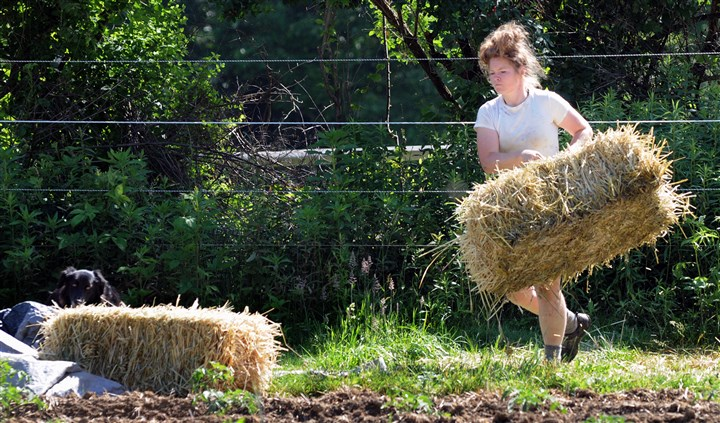 Rombach_business_farm_3-2 Margaret Schlass of One Woman Farm clears some hay while working on her farm in Gibsonia.