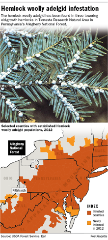 the methods in dealing with the hemlock woolly adelgid in the great smoky mountains national park Adelgids were first spotted in east tennessee in 2002 and have killed many hemlocks in the great smoky mountains national park and the cherokee national forest in both places, hemlocks are being treated to combat the invasion.