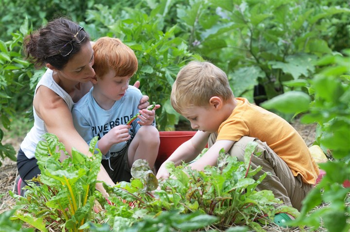 20140103_august.jpg Joanna Amelio of Gibsonia and her sons, Ethan, 4, left, and Charlie, 6, pick chard at the Rosalinda Sauro Sirianni Garden in Bellevue. Ms. Amelio's mother, Teresa I. Amelio, donated the land for the garden.