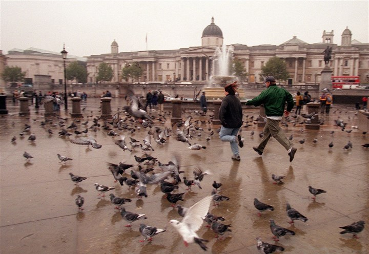 TRAVEL WLT-LONDON-POPPINS 2 OC A couple races through a few of the thousands of pigeons that live in Trafalger Square in London, England.